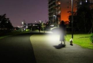 暗闇での犬の散歩